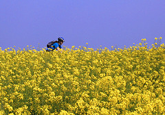 cycling in a field of flowers
